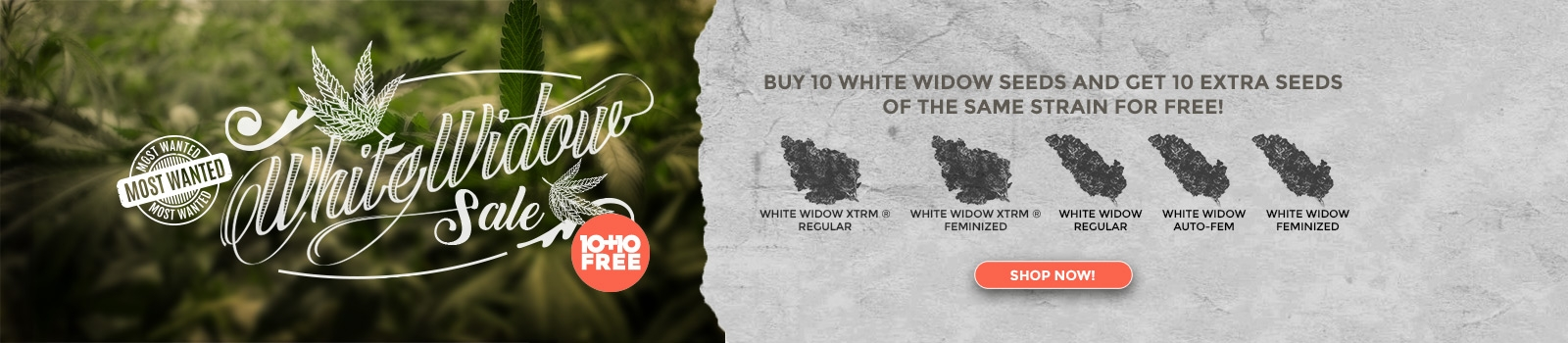 White Widow Sale
