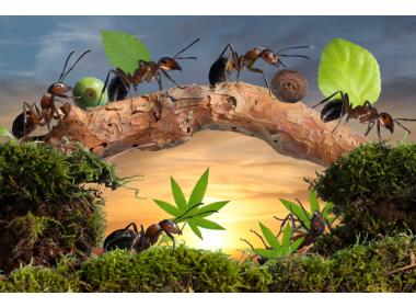 Keeping Ants Out of Your Plants