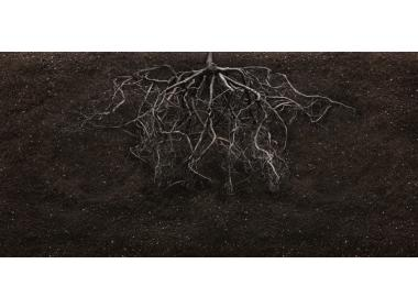 Weed plants and entangled roots