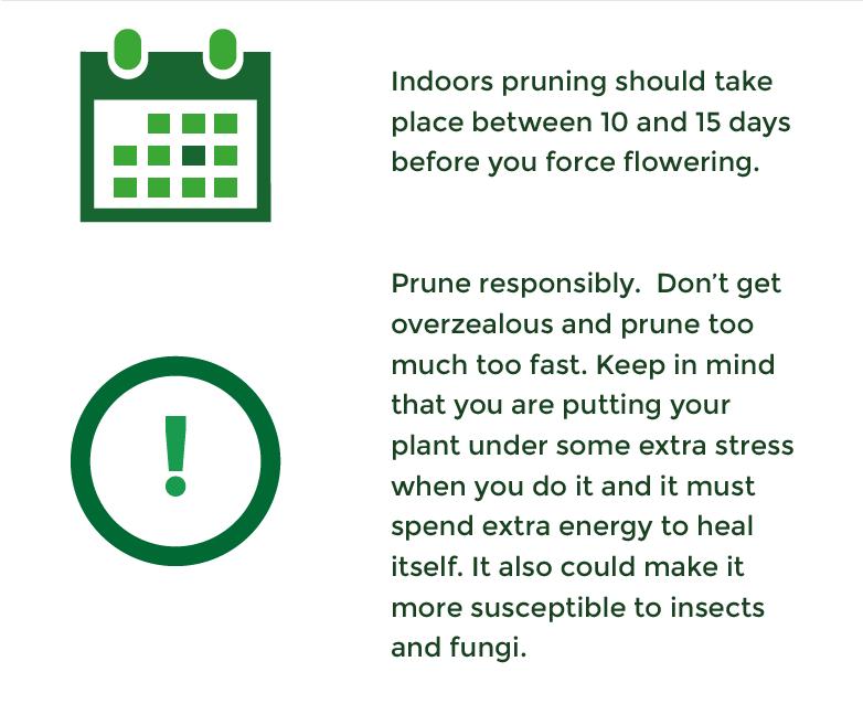 Indoor Pruning