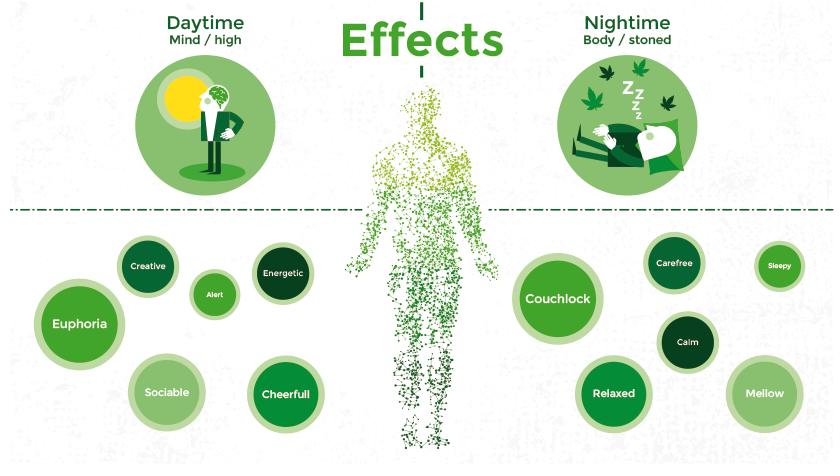 effects, daytime, nighttime