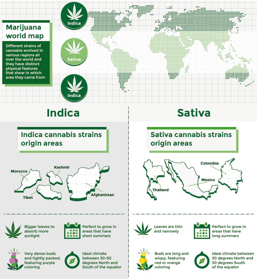 Indica Sativa