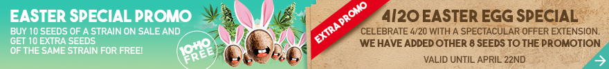 Easter special promo - 10+10 free
