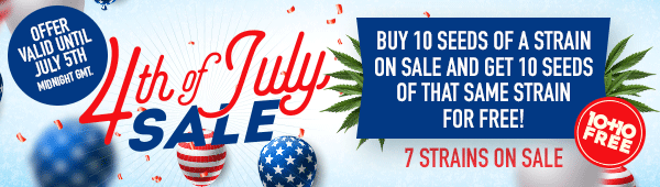 Independence Day 4th of July sale - Buy 10 seeds of a strain on sale and get 10 seeds of that same strain for free - 5 strains on sale - offer valid until July 5th midnight GMT - SHOP NOW