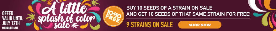 A Splash of Color Sale - Buy 10 seeds of a strain on sale and get 10 seeds of that same strain for free