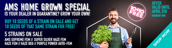 AMS Home Grown Special - Buy 10 seeds of a strain on sale and get 10 seeds of that same strain for free - 5 strains on sale - offer valid until April 5th midnight GMT - SHOP NOW