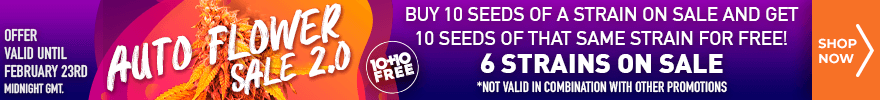 Auto Flower Sale 2.0 - Buy 10 auto flower seeds of a strain on sale and get 10 seeds of that same strain for free - 6 strains on sale - offer valid until February 23rd midnight GMT - SHOP NOW