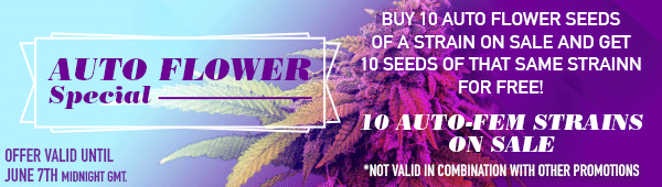 Auto Flower Special - Buy 10 auto flower seeds of a strain on sale and get 10 seeds of that same strain for free - 10 strains on sale - offer valid until June 7th midnight GMT - SHOP NOW