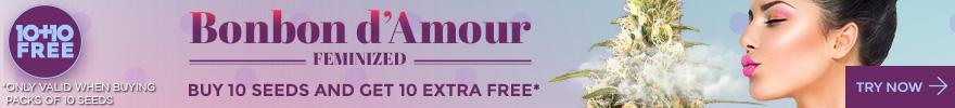 bonbon d'amour 10+10free