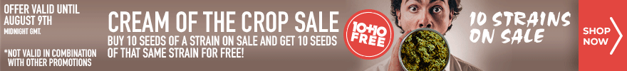 Cream of the Crop Sale - Buy 10 seeds of a strain on sale and get 10 seeds of that same strain for free - 10 strains on sale - offer valid until August 9th midnight GMT - SHOP NOW
