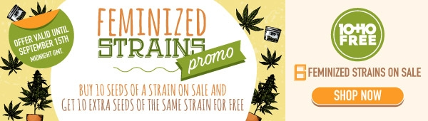 10+10 free Sale - Buy 10 SEEDS of a strain on sale and get 10 extra seeds of the same strain FOR FREE!