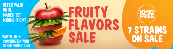 Fruity flavor Sale - Buy 10 fruity seeds of a strain on sale and get 10 seeds of that same strain for free - 7 strains on sale - offer valid until March 1st midnight GMT - SHOP NOW