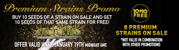 Premium Strains Promo - BUY 10 SEEDS OF A STRAIN ON SALE AND GET 10 SEEDS OF THAT SAME STRAIN FOR FREE! - 8 Strains on SALE - OFFER VALID UNTIL January 19th Midnight GMT. - SHOP NOW