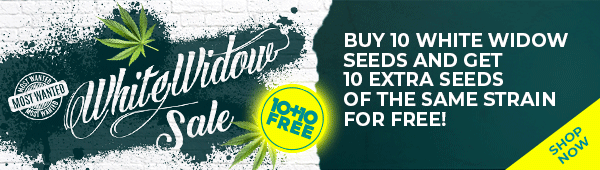 Buy 10 white widow and get 10 white widow for free