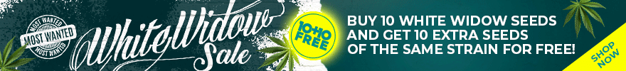 Buy white widow and get 10 white widow for free