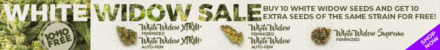 White Widow Sale - 10+10 Free - Buy 10 White Widow seeds and get 10 Extra seeds of the same strain for free! - Shop Now