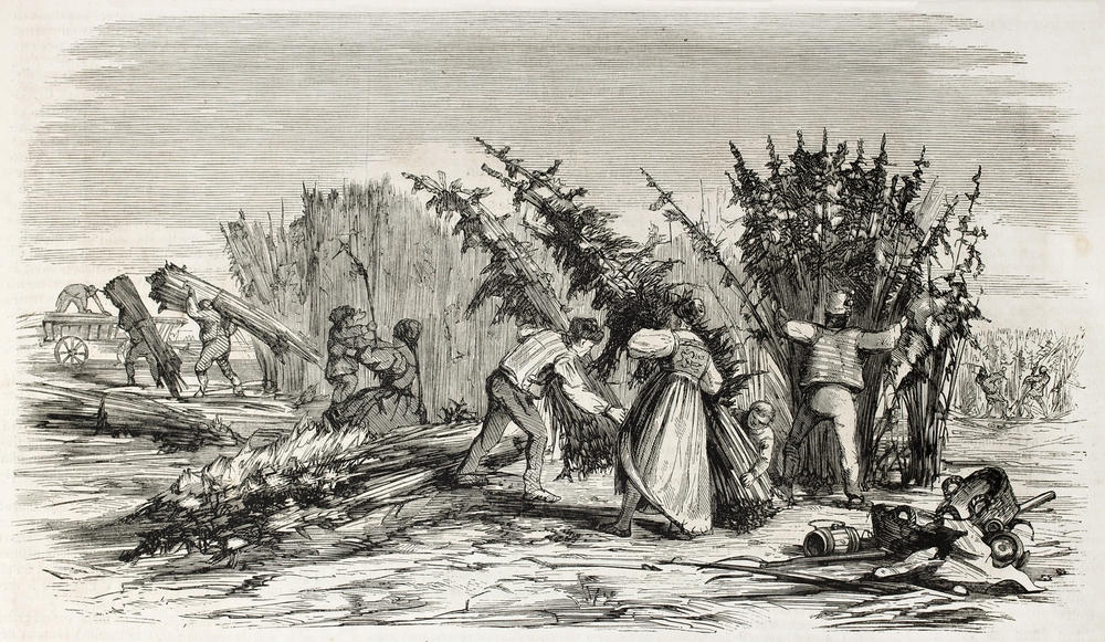 old drawing of people harvesting cannabis