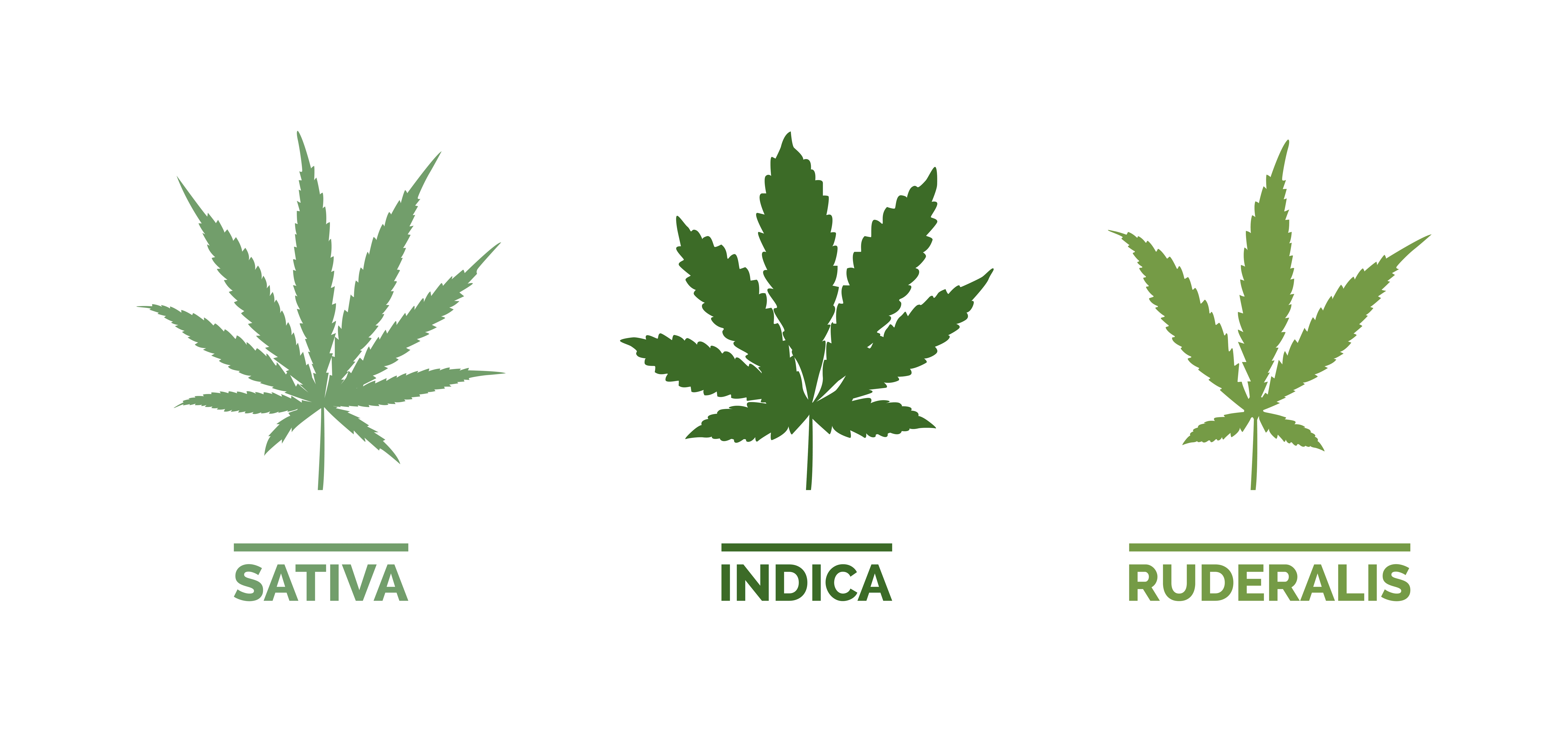 types of cannabis leaves